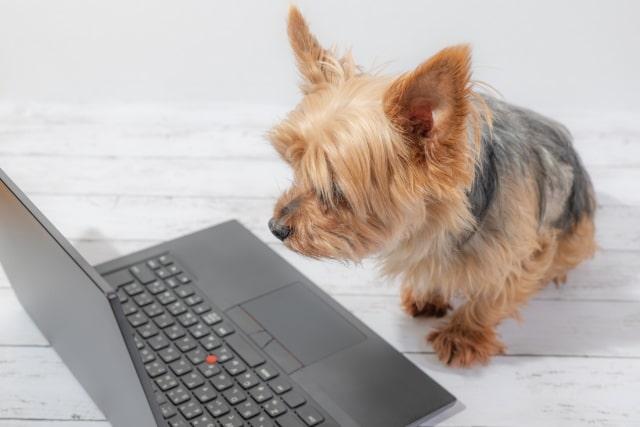 パソコンを見つめる犬