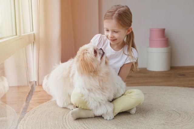 Idea dog chef(イデアドッグシェフ)が身体への優しさと無添加にこだわる理由
