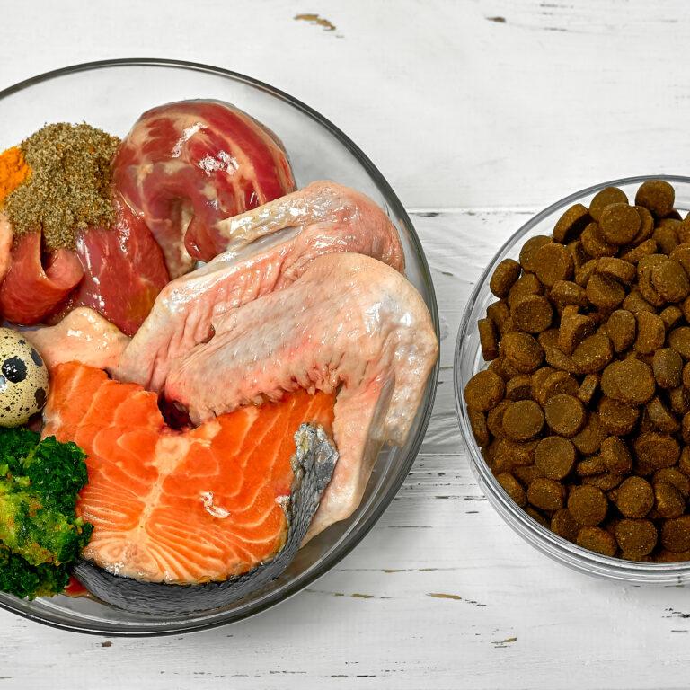手作りごはんは犬に良くない?犬にはドッグフードを与えるべき?