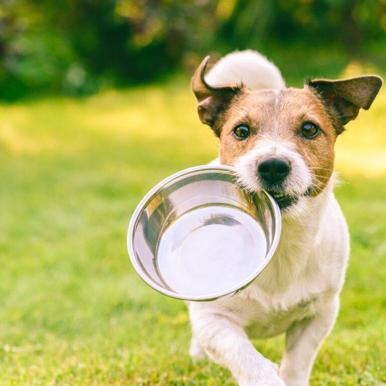 IDEA DOG CHEFのこだわり②~美味しさ、食いつき~