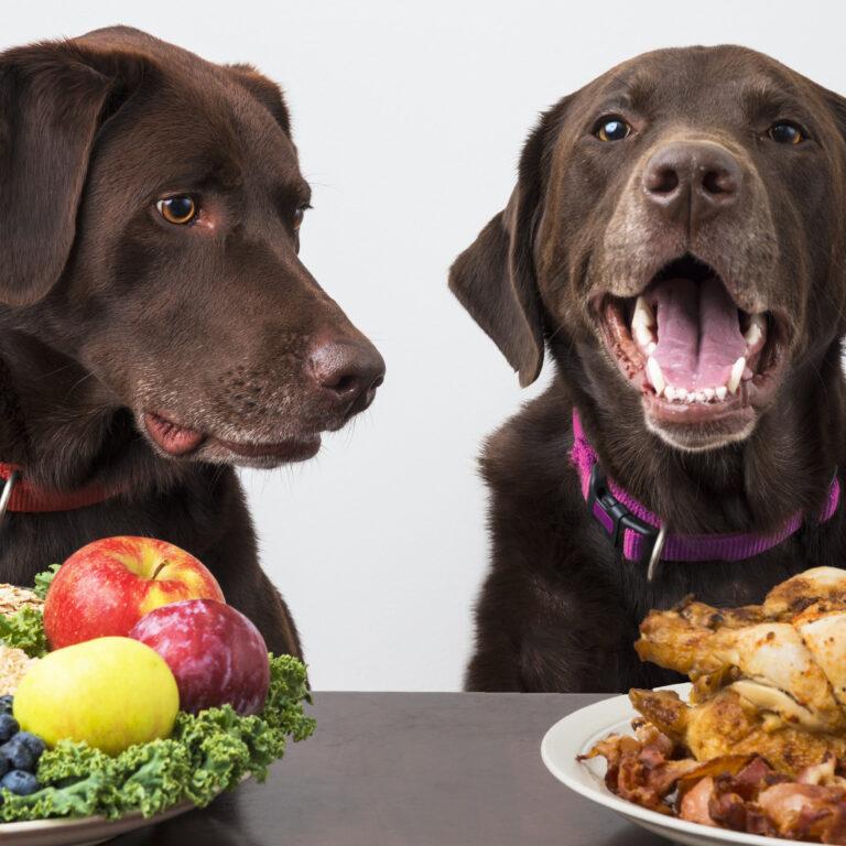 犬に手作りごはんをー手作りごはんはメリットがいっぱい!